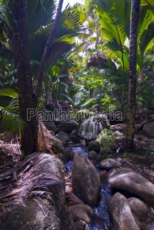 viaggio viaggiare albero alberi africa giungla