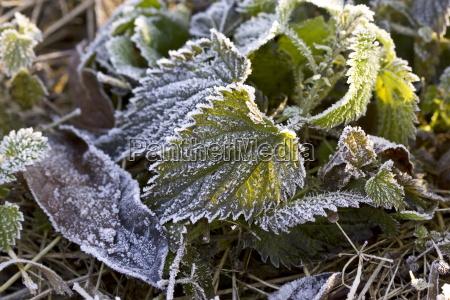 colore inverno orizzontale gelo congelato inghilterra