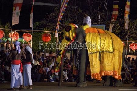 ceremonial elephant in the navam maha