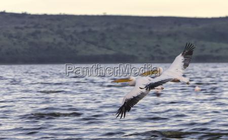 viaggio viaggiare uccello parco nazionale kenia