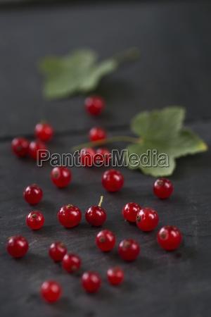 foglia legno freschezza frutta fotografia foto