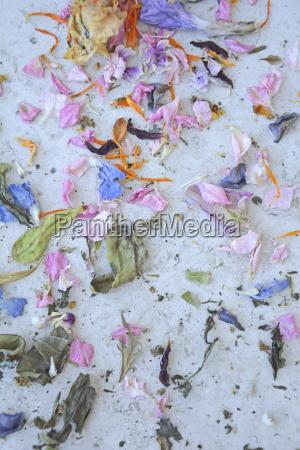 petali essiccati colorati