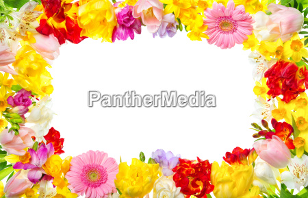 cornice di fiori colorati con testo