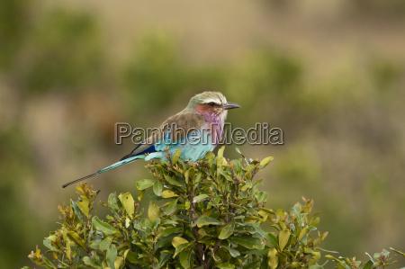 animale uccello luce del sole ramo
