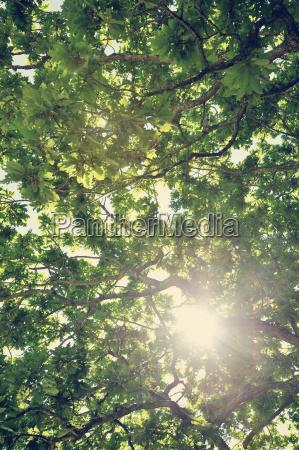 svezia moelle sole che splende attraverso