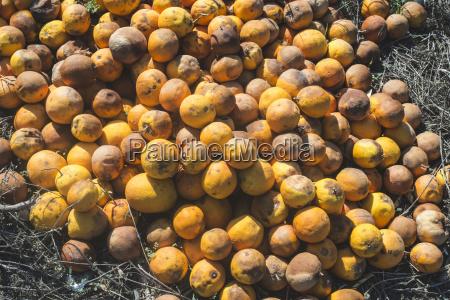 arancia suolo terra terreno marrone agricoltura
