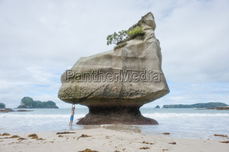 nuova zelanda isola del nord waikato