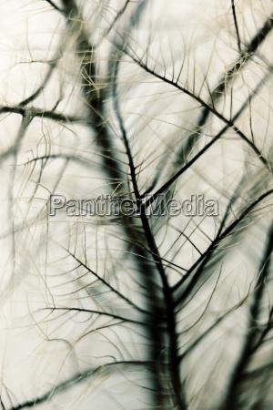 dettaglio botanica cespuglio fotografia foto sfocato