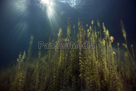 baviera sottacqua germania fotografia foto acqua