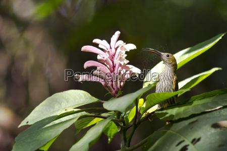 bere animale uccello fiore pianta parco