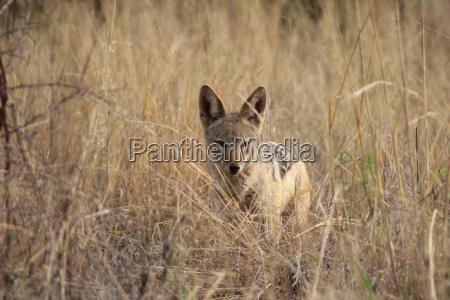 parco animale mammifero selvaggio africa animali