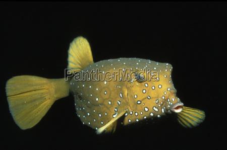 primo piano close up pesce orizzontale