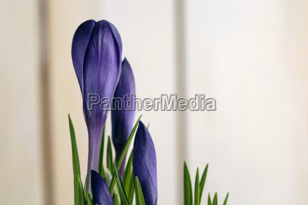 primo piano close up fiore pianta