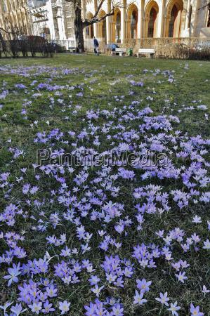 citta fiore pianta europa baviera primavera