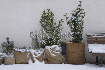 inverno muro farmaco proteggere crescita mancare