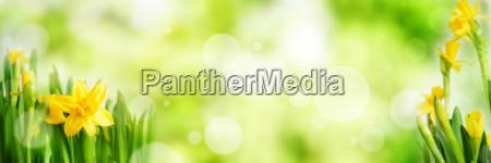 sfondo panoramico a molla verde brillante