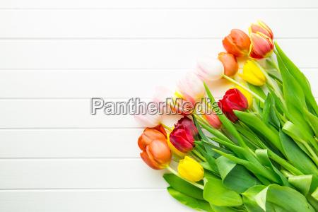 bello bella fiore pianta primavera impianto