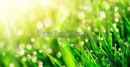 luce verde estate primavera prato erba