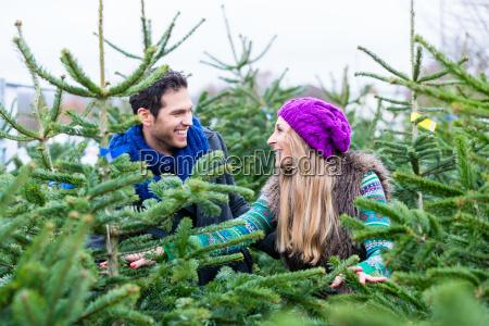 coppia cerca di acquistare alberi di