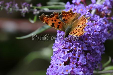 giardino farfalla colorato raro estinzione minacciati