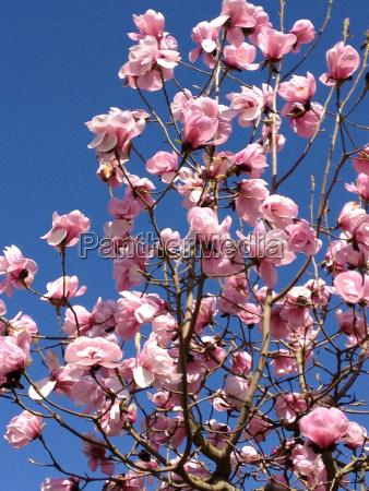 colore albero fiore pianta fioritura fiorire