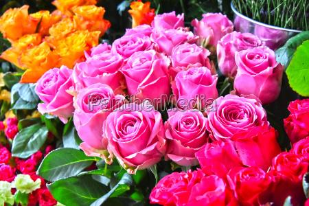 fiore pianta rosa fioritura fiorire mazzo