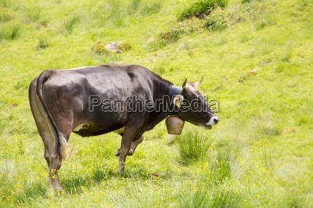agricolo animale mammifero agricoltura campo biologico