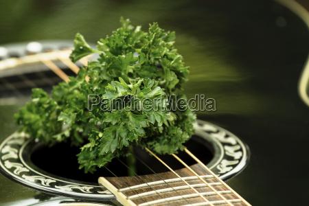 gitarre mit petersilie