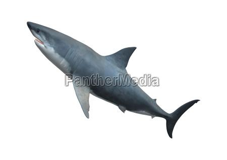 rilasciato morte animale selvaggio pesce punta