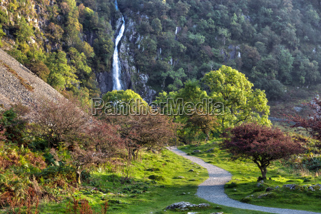 colore albero alberi parco pietra sasso