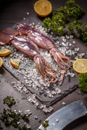 crudo calamaro seppia conciso succinto schiacciato