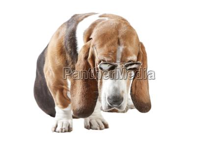rilasciato opzionale animale animale domestico ritratto