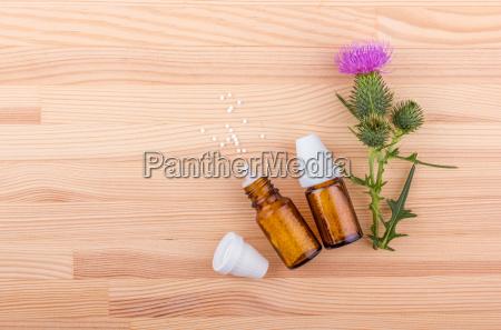 salute fiore pianta legno porpora viola