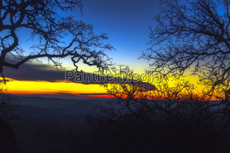 silhouettes of branches against sky at