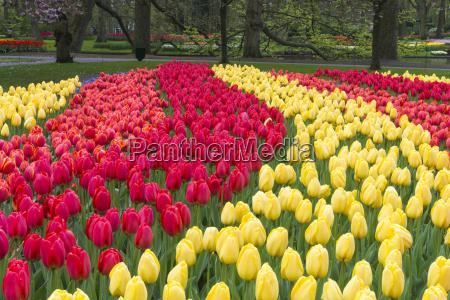 viaggio viaggiare colore giardino fiore pianta