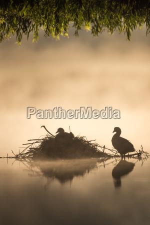 viaggio viaggiare colore uccello nebbia alba