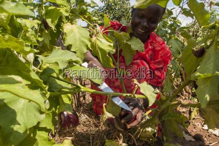 risata sorrisi foglia viaggio viaggiare agricolo