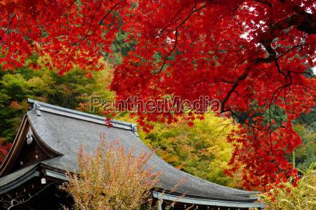 viaggio viaggiare tempio colore albero giardino