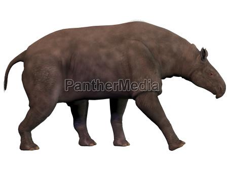 mammifero erbivoro rinoceronte oligocene eocene