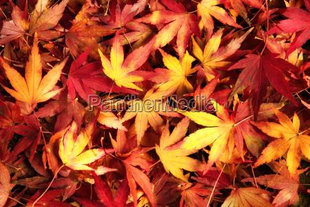 foglie colorato autunnale fondale di fondo