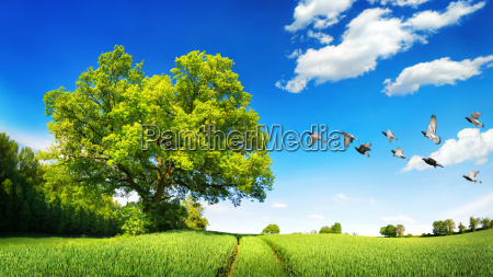 albero verde campo estate primavera prato