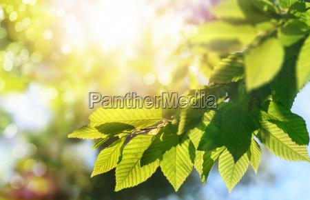 verde foglie estate primavera fondale di