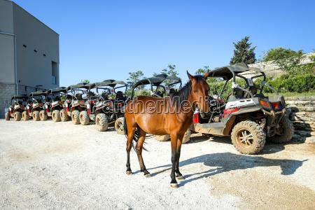 albero collina cavallo animale traffico marrone
