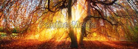 raggi doro del sole in autunno