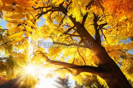 albero foglie autunnale paesaggio natura foresta