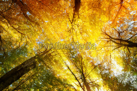 albero alberi raggio di sole flora