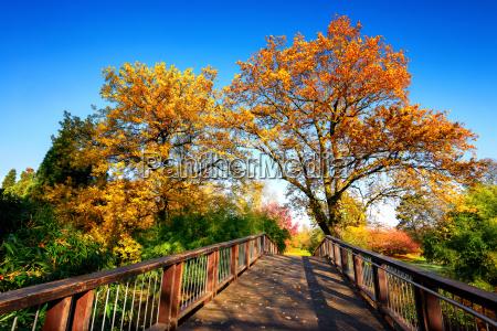 ponte di legno e bella natura