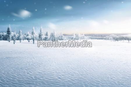 paesaggio del campo nevoso con alberi