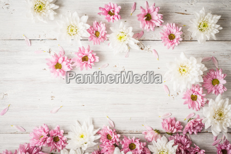 pink and white flowers on the