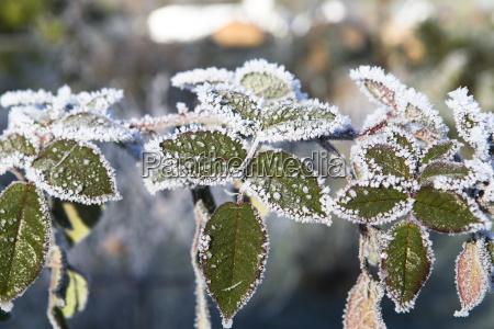 inverno foglie congelato nevicata brina neve